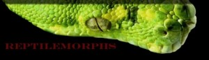 reptilemorphsbanner