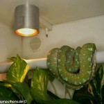 Beleuchtung, Terrarium, Terrarienanlage, Morelia viridis, Grüner Baumpython