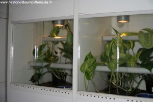 Terrarium, Terrarienanlage, Morelia viridis, Grüner Baumpython