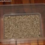 Vermiculite,Zucht Morelia viridis , Grüner Baumpython, Chondropython